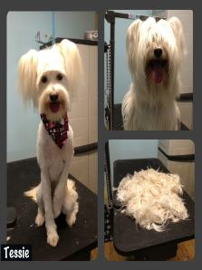 Full service and exclusive dog grooming club in chula vista ca www because of how our services are set up there will be an additional fee if your dog is left for more than 2 hours after they are finished with our groomer solutioingenieria Gallery