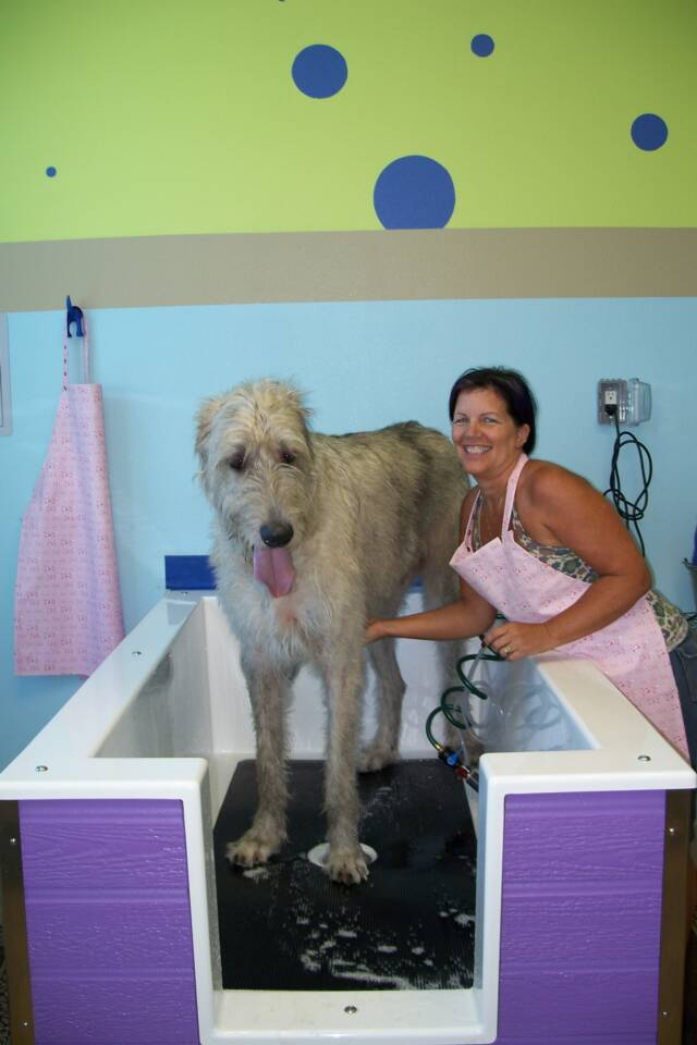 A fun self serve dog wash in chula vista free blueberry facial www a fun self serve dog wash in chula vista free blueberry facial doggiedip solutioingenieria Gallery